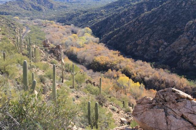 AZ Trail Kelvin 033