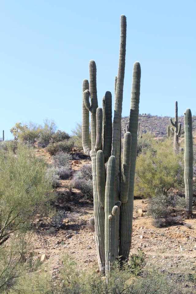 AZ Trail Kelvin 089