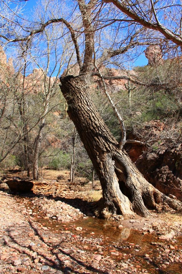 Martinez Canyon 107