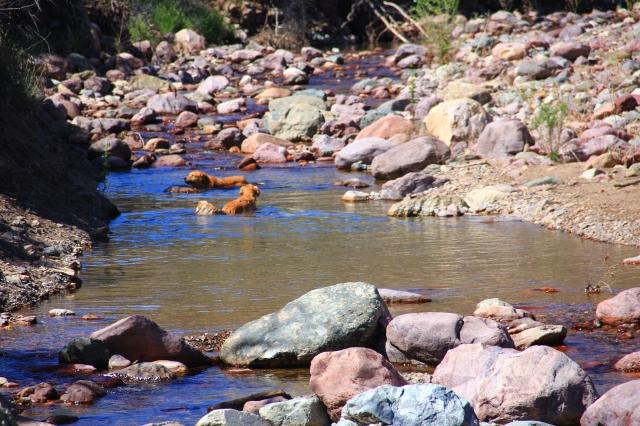 Deer Creek 033
