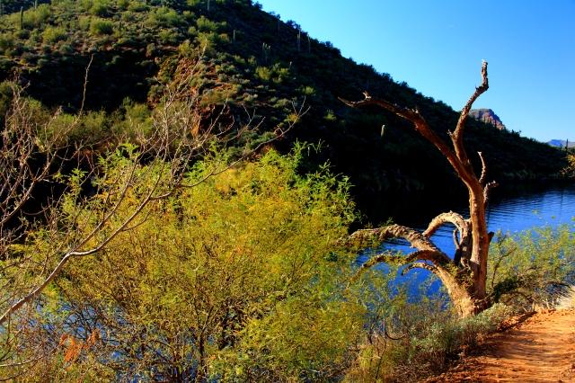 Saguaro Lake3