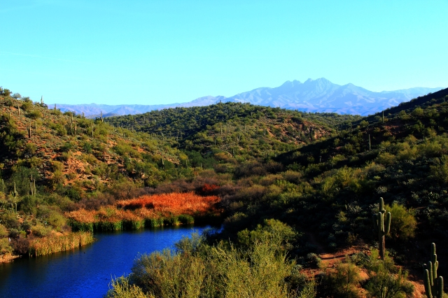Saguaro Lake4