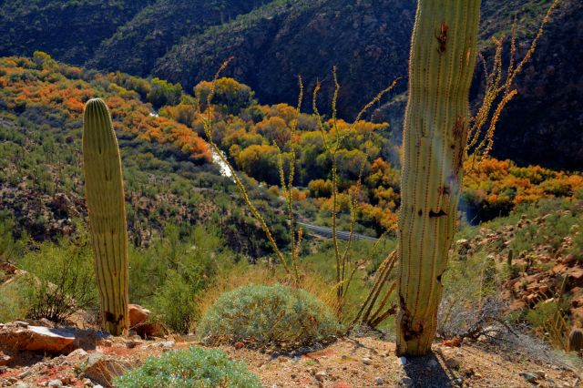 Gila Canyon color 1